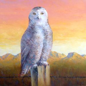 Snowy-Owl-1-20x20