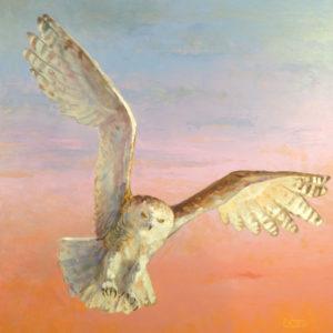 Snowy-Owl-2-20x20